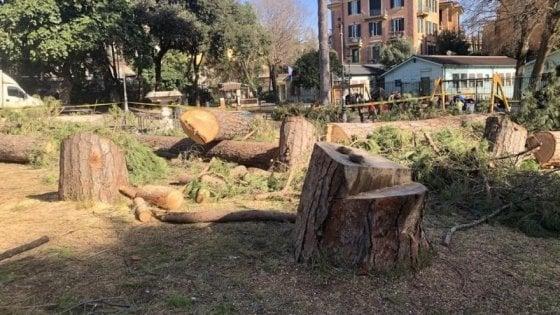 """""""Serve una legge per la gestione degli alberi nelle città"""""""