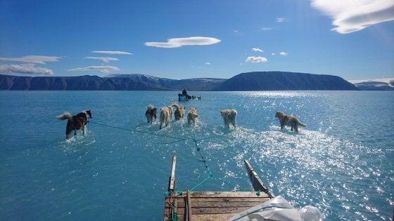 Groenlandia, il ghiaccio si scioglie. E i cani da slitta corrono sull'acqua