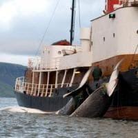 La Norvegia è il paese che caccia più balene al mondo