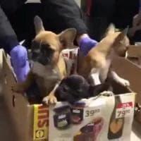Il traffico illegale di cuccioli di cane vale 300 milioni l'anno