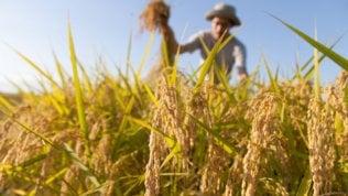 """Clima, gli agricoltori: """"Pianeta a rischio, ora obiettivi e tempi certi"""""""