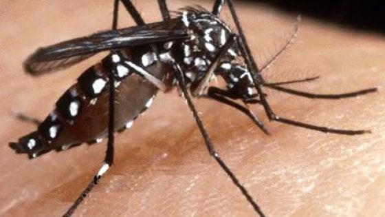 Febbre dengue, in Brasile +163%  di morti