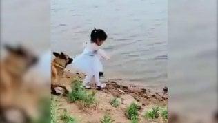 La palla cade in acqua: il cane blocca la bimba e si tuffa lui