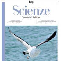 Su Scienze il viaggio dell'ultimo piatto di plastica