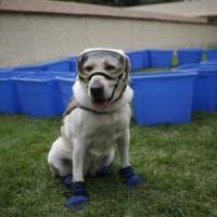 Va in pensione Frida, il cane eroe del terremoto in Messico