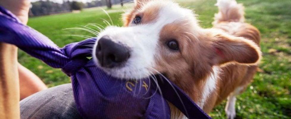 Anche il cane soffre moltissimo il caldo e l'umidità, i consigli per tutelare la sua salute