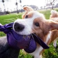 Anche il cane soffre caldo e umidità, i consigli per difenderli