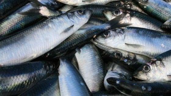 """La produzione ittica di Findus """"sostenibile"""" al 100% nel 2025"""