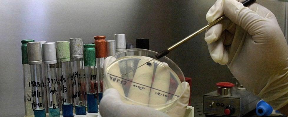 Costruito il primo embrione umano su un chip, sarà utile per studiare i farmaci