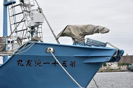 Giappone, si riapre la controversa caccia alle balene dopo 30 anni di interruzione