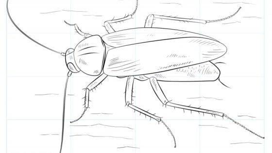 """Gli scarafaggi diventano invincibili. """"Quasi impossibili da eliminare"""""""