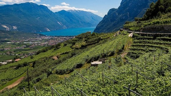 Giro del lago di Garda in 6 cantine che meritano di essere conosciute