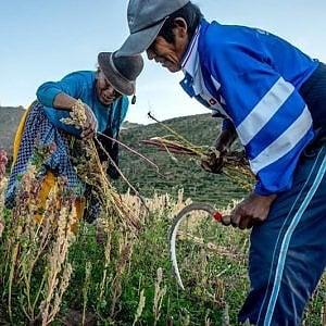 Mercosur, l' accordo con l'UE sacrifica l'Amazzonia per il commercio: liberalizzazati dazi, pesticidi, OGM, copyright, eccellenze alimentari