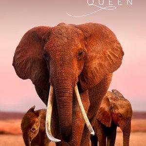 Elefanti, adolescenti musulmane e una serie di Octavia Spencer. Apple sbarca al festival