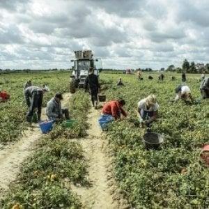 Cibo, in Italia 3 consumatori su 4 disposti ad acquistare alimenti prodotti senza sfruttare i lavoratori