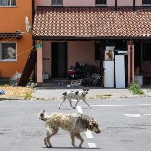 Salvini caccia i migranti ma aiuta i cani