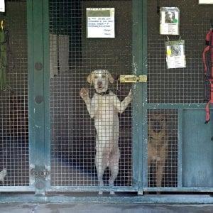 Due cani azzannano un agnello, impiccati per vendetta