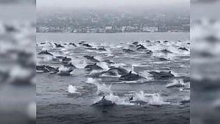 """Decine di delfini 'inseguono' la barca: """"Sembravano super felici"""""""