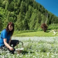 """La storia di Olga: """"Così ho mollato tutto per coltivare stelle alpine"""""""