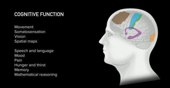 """""""Così il cervello umano controlla il computer"""", Elon Musk svela i piani di Neuralink"""