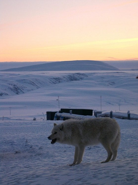 Clima: caldo record ad Alert, il paese più a Nord del pianeta