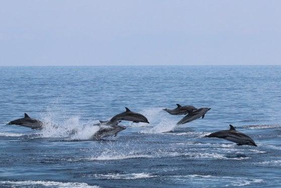 Con occhi aperti e smartphone possiamo aiutare delfini e balene