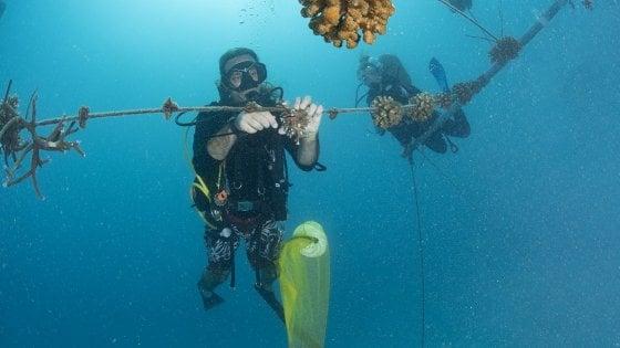 """""""Bacardí sound of sea project"""", ascoltare la musica del mare e salvare la barriera corallina"""