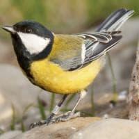 Clima, caprioli e passeri tra le specie più minacciate