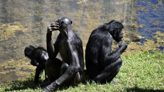 """""""Guardiamo un film insieme?"""" Anche alle scimmie piace la condivisione"""