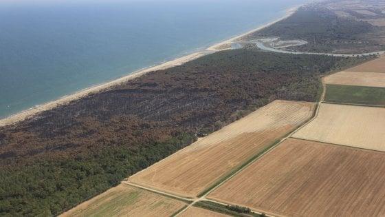 Dopo gli incendi, la rinascita verde: così rivive il bosco sul delta del Po