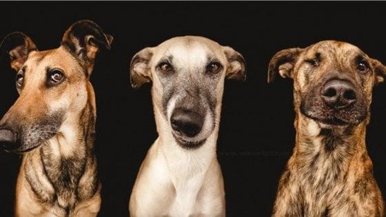 Il tumore più antico ha almeno 4.000 anni ed è comune nei cani