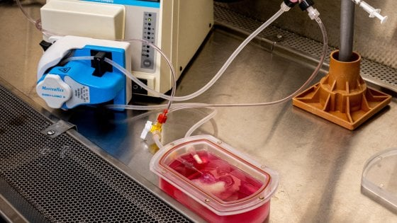 """Un mini-fegato da cellule umane. """"Primo passo per terapie e trapianti"""""""