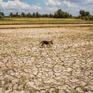 Laos, la siccità devasta le risaie: coltivato solo il 40% della terra disponibile
