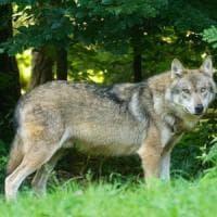 Lupo la for Ardeatina arredamenti di lupi gabriella