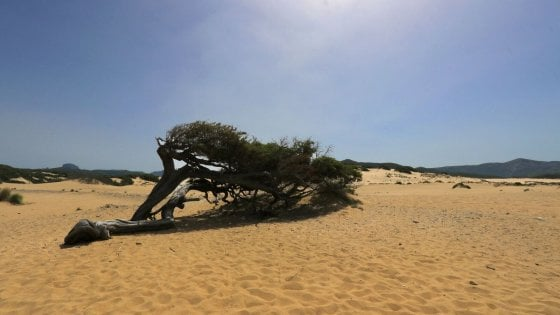 Dal litorale laziale alla Danimarca. Le dune che non t'aspetti