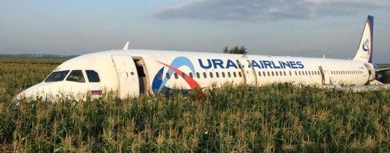 Un Airbus russo atterra d'emergenza in un campo di grano dopo scontro con stormo di gabbiani