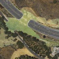 """""""Vietato il transito alle auto"""": in California sorgerà il ponte solo per animali"""
