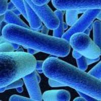 Spagna dichiara l'emergenza mondiale per un'epidemia di listeriosi
