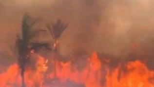 Record di incendi in Amazzonia per la deforestazione incoraggiata da Bolsonaro. Ma lui attacca le Ong video