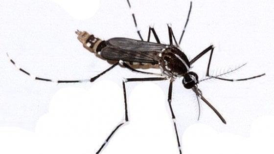 Ricostruita grazie al Dna l'invasione della zanzara tigre
