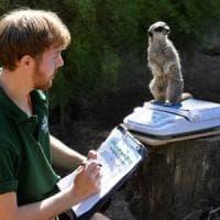 Allo zoo di Londra è la settimana della bilancia: gli animali sono pesati e misurati per...