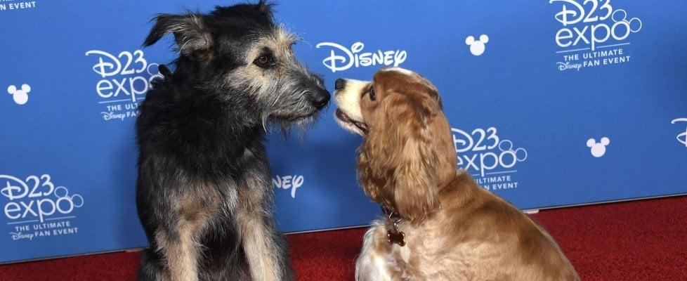 Disney schiera le truppe per la nuova piattaforma, da Star Wars a 'Lilli e il Vagabondo'