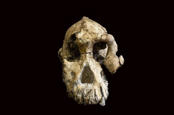 Paleoantropologia, ecco il ritratto dell'antenato di Lucy. Farà luce sui progenitori dell'uomo