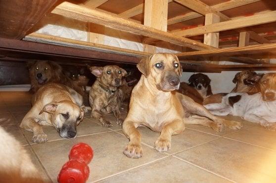 Bahamas, donna salva 100 cani dall'uragano ospitandoli nel suo appartamento
