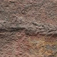 Le tracce più antiche di un animale sulla Terra sono di un verme