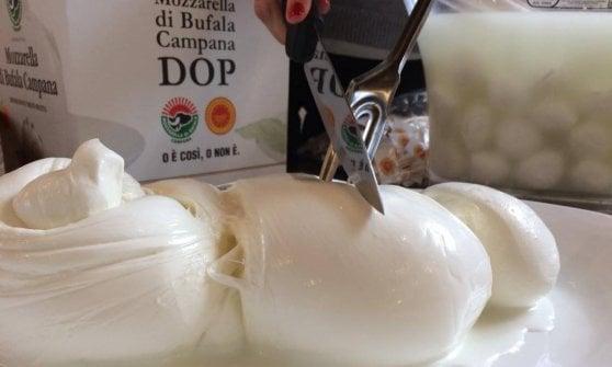 Mozzarella di bufala regina dei social: è la più amata dagli influencer del mondo