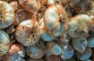 Dolce e delicata (ed enorme), ecco la cipolla di Giarratana