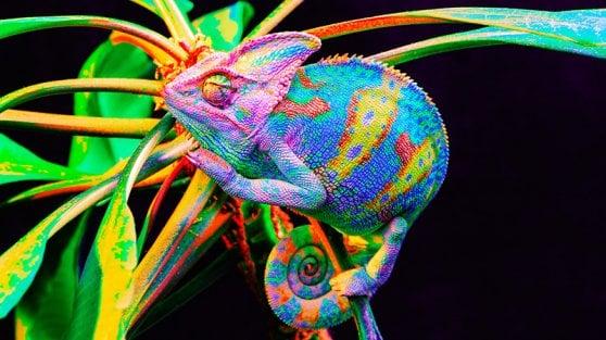 Arriva la pelle-camaleonte, cambia colore con la luce e il calore