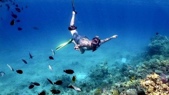 Dalla flora marina arriva l'ossigeno essenziale per la vita negli oceani super caldi