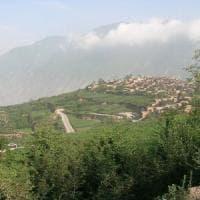 Col riscaldamento globale le piante si rifugeranno in montagna